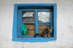41_cat_on_a_windowsill