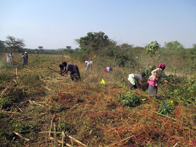 00_Land-clearing-and-fencing_01