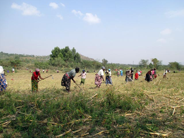 00_Land-clearing-and-fencing_02
